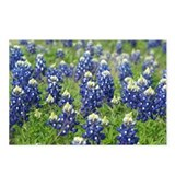 Great state of texas Postcards (Package of 8)