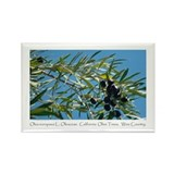 Wine Country Ripe California Olives Magnet