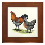 Ameraucana Poultry Framed Tile
