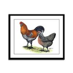 Ameraucana Poultry Framed Panel Print