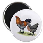 """Ameraucana Poultry 2.25"""" Magnet (100 pack)"""
