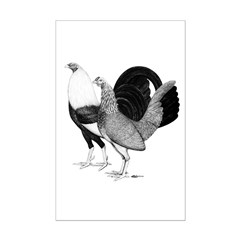 American Game Poultry Mini Poster Print