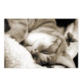 Sleeping Cat Postcards (Package of 8)