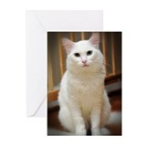 White Cat Greeting Cards (Pk of 20)
