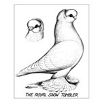 Royal Snow Tumbler Pigeon Small Poster