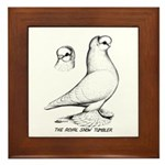 Royal Snow Tumbler Pigeon Framed Tile