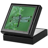 Female Spangled Skimmer Keepsake Box