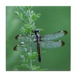 Female Spangled Skimmer Tile Coaster