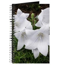 Balloon Flower/Chinese Bellflower Journal/Notebook