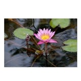 Ruben's Waterlily Postcards (Package of 8)