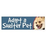 Adopt a Shelter Pet-Spitz Bumper Car Sticker