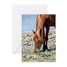 Cumberland Horse CU Greeting Cards (Pk of 10)