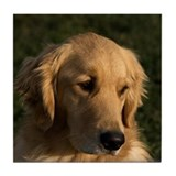 Golden Retriever Head Tile Coaster