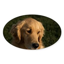 Golden Retriever Head Decal