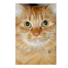 Orange Cat Postcards (Package of 8)
