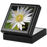 White Lotusflower Keepsake Box