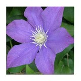Purple Clematis Flower Tile Coaster