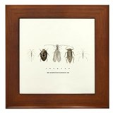 Insecta Framed Tile