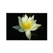 White Lotusflower Rectangle Magnet
