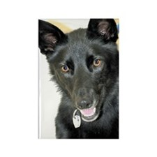 Belgian Shepherd Rectangle Magnet