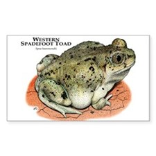 Western Spadefoot Toad Decal