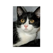 Tuxedo Shelter Cat Rectangle Magnet