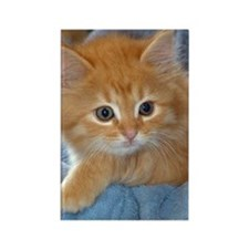 Orange Kitten Rectangle Magnet