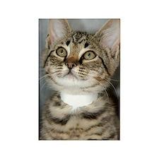 Tabby Kitten Rectangle Magnet