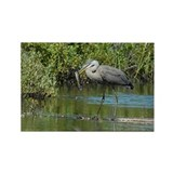 Great Blue Heron fishing Rectangle Magnet