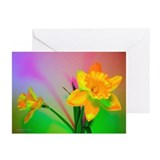 Chromatic Daffodil Shadows 55 Greeting Cards (10)