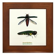 Emerald Ash Borer Framed Tile