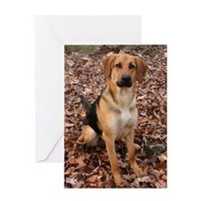 Black Mouth Cur Photo Greeting Card