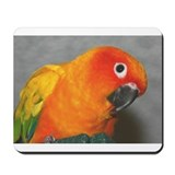 sun conure Mousepad