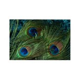 Green Peacock Feather Rectangle Magnet (100 pack)