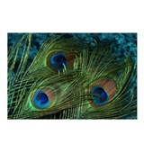 Green Peacock Feather Postcards (Package of 8)