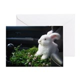 5x7 Bunny greeting card