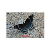 BLUE SWALLOWTAIL Rectangle Magnet