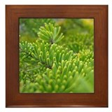 Acadia N.P. Pine Framed Tile