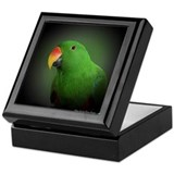 Male Eclectus Parrot Keepsake Box