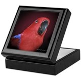 Female Eclectus Parrot Keepsake Box