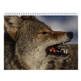 Coyote Wall Calendar