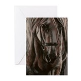 Grey Horse Greeting Cards (Pk of 20)
