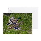 Mallards Flying Greeting Cards (Pk of 10)