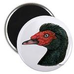 Muscovy Duck Head Black Magnet