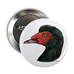 "Muscovy Duck Head Black 2.25"" Button (100 pac"