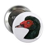 "Muscovy Duck Head Black 2.25"" Button"