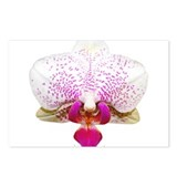 Orchid Lover Postcards (Package of 8)