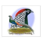Lady Amherst Pheasant Small Poster