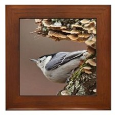 White-breasted Nuthatch Framed Tile