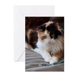 Calico Kitty Greeting Cards (Pk of 20)